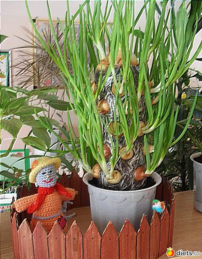 Как вырастить цитрусовые дома.