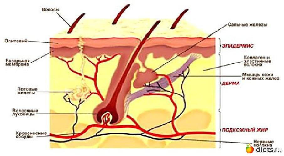 Лечение себорейного выпадения